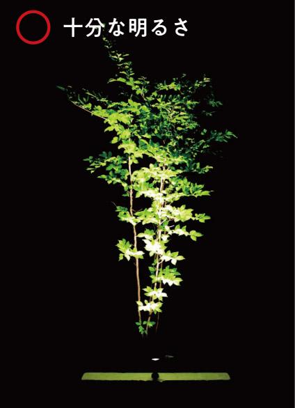 樹木に対して光量が十分である写真