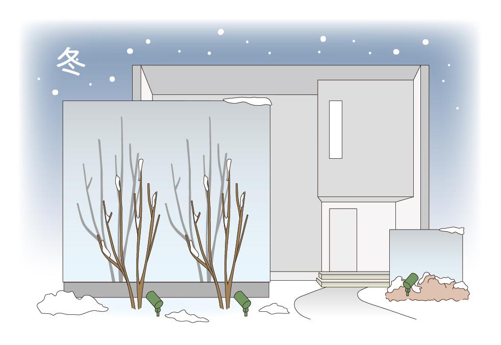 冬のお庭のライトアップのイメージ