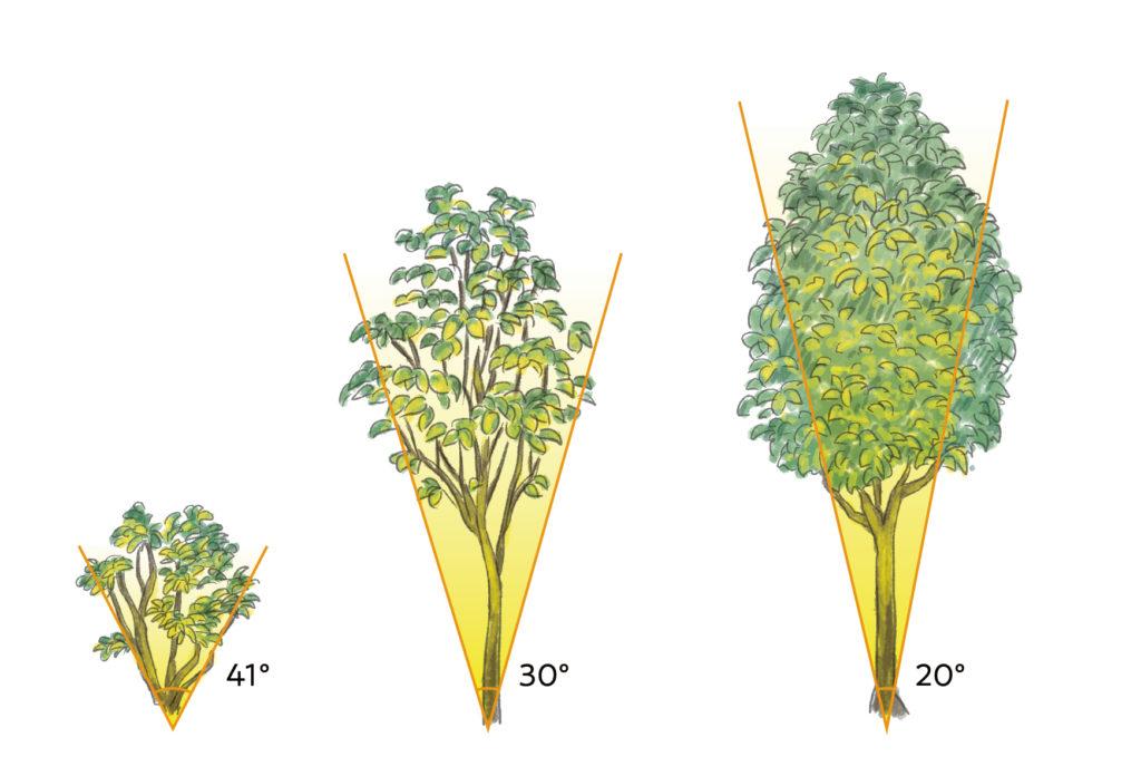 樹木の広がりと配光角の関係