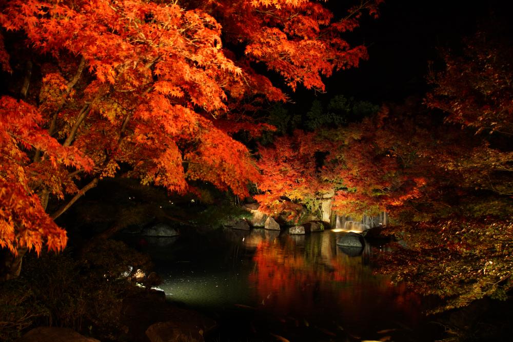 紅葉を電球色でライトアップした写真