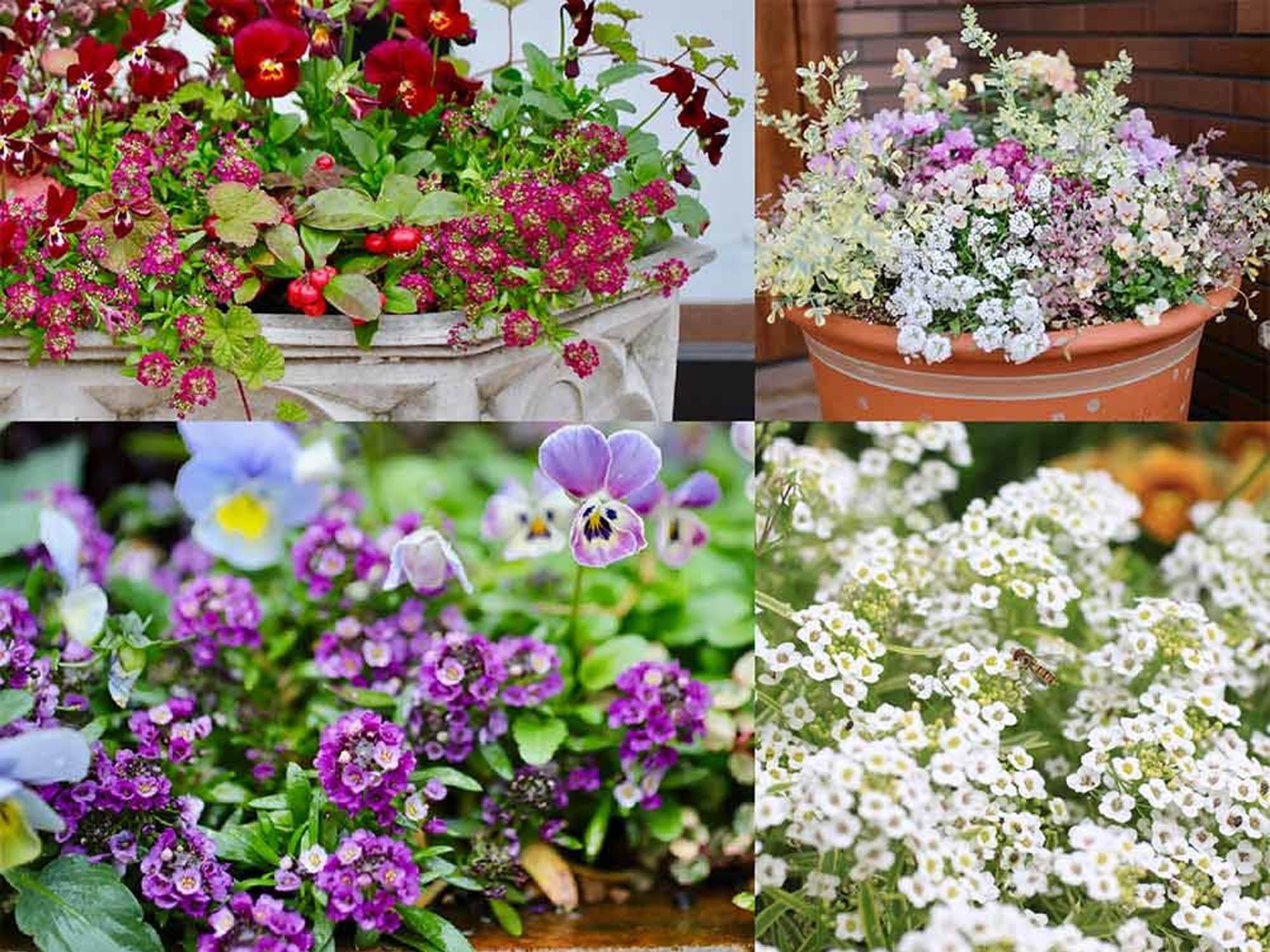 冬に咲く花々の写真