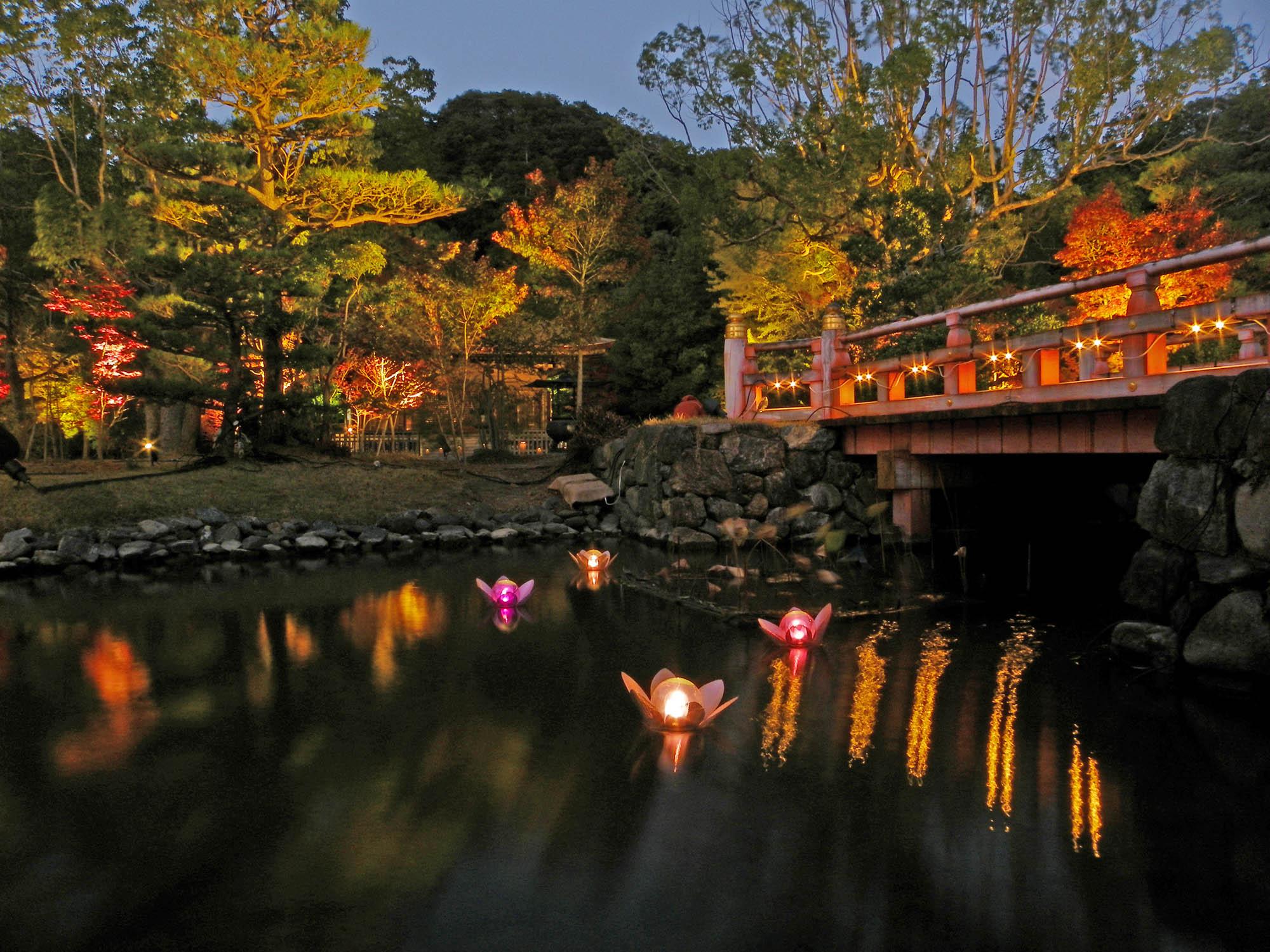 白水阿弥陀堂のライティング時の夜の写真