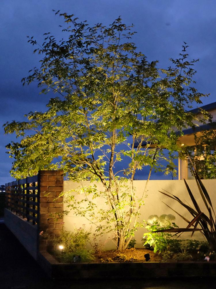 樹冠が広い樹木をライトアップした