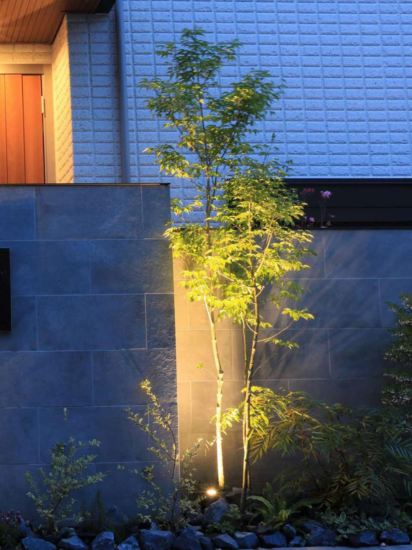 樹冠が狭い樹木をライトアップした例