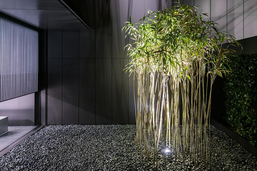 樹木をグランドライトでライトアップした例