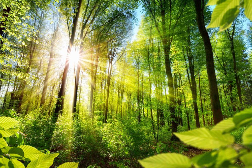 環境のイメージ画像