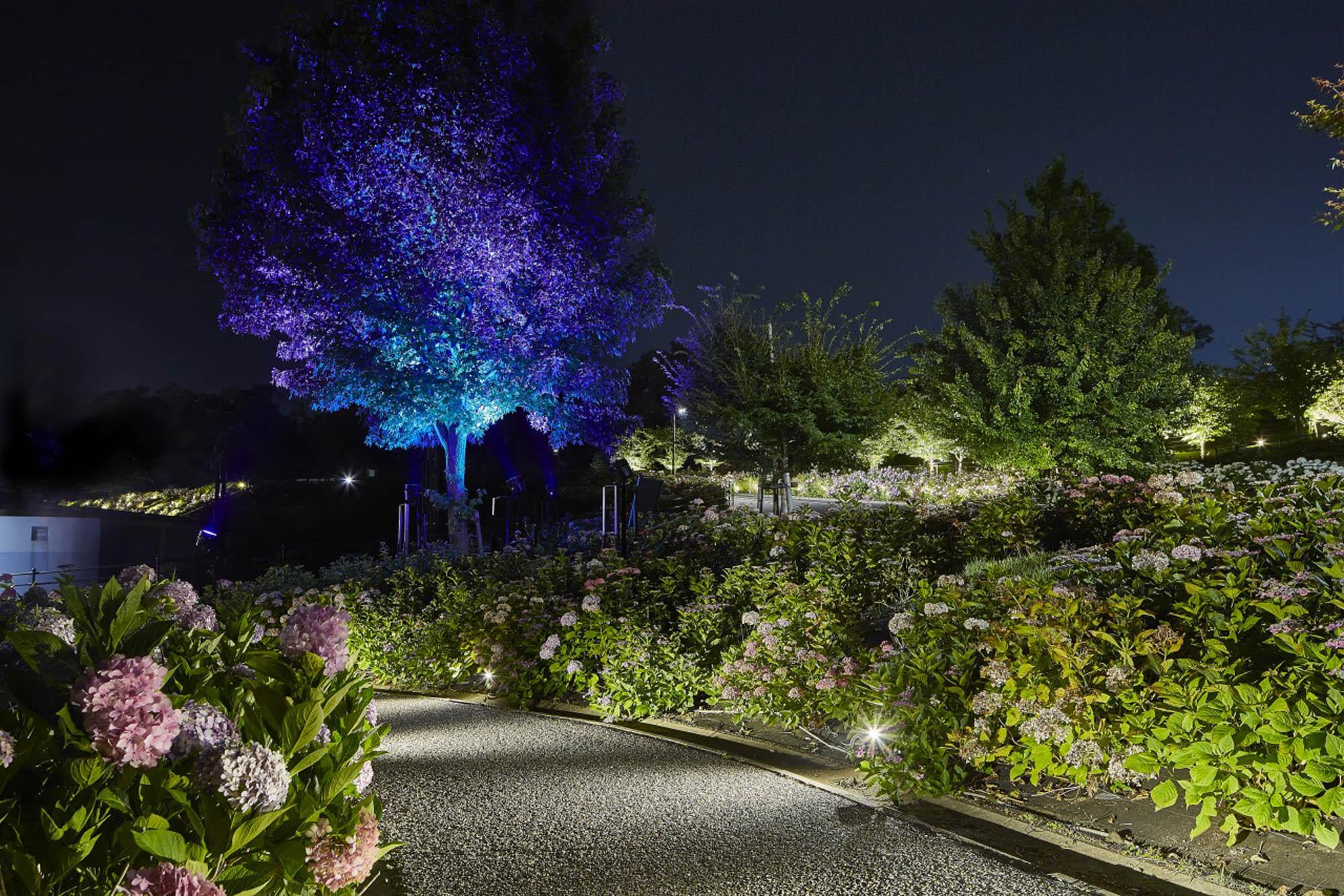 しらとりの郷のシンボルツリーをカラーライティングしている写真