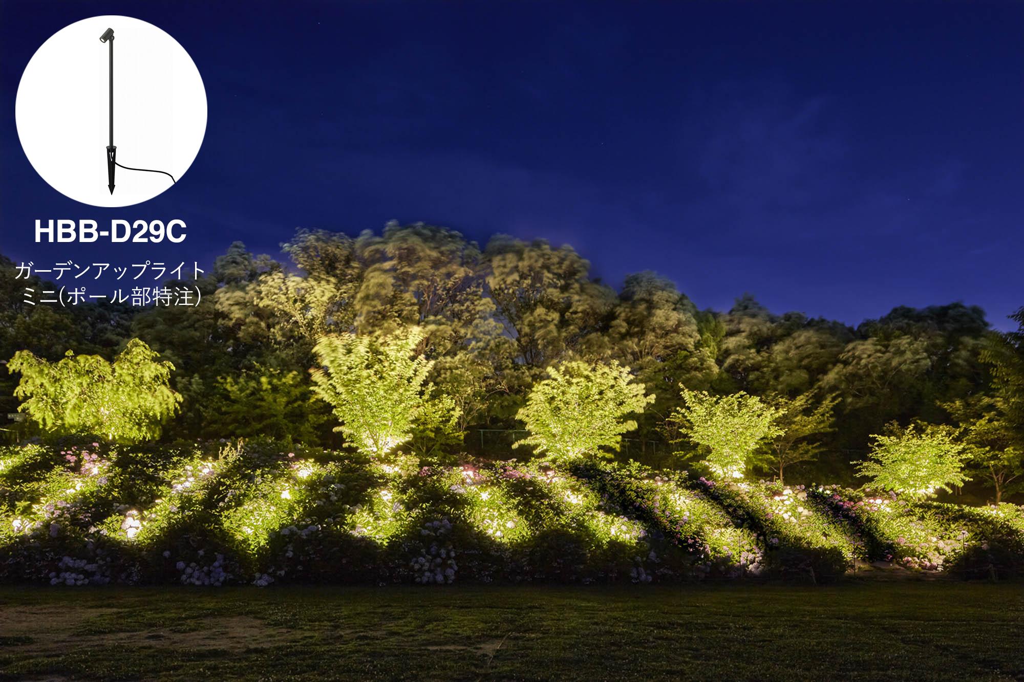 敷地内の最も奥に植えられているアジサイをライトアップしている写真