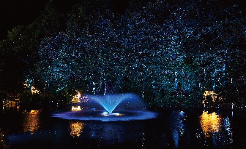 森の中に設置された動物のLIMITED LINEと樹木を照らすイルミネーションの様子