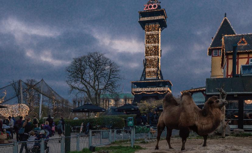 動物園とイルミネーションの掛け合わせ