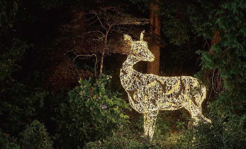 森の中に設置された動物のLIMITED LINE
