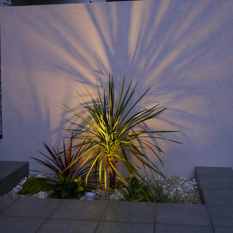 シャドーライティングされた低い植栽と壁面