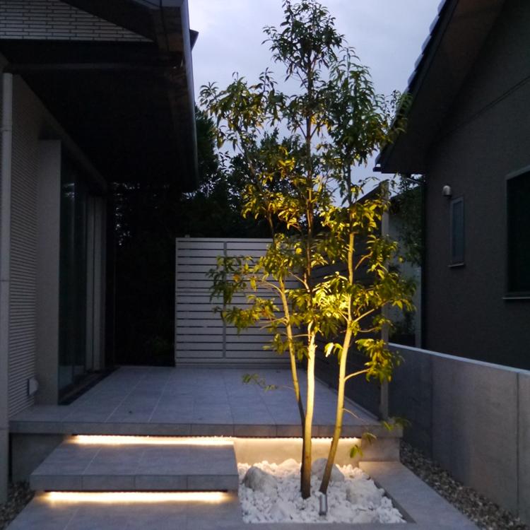 アップライティングされた樹木