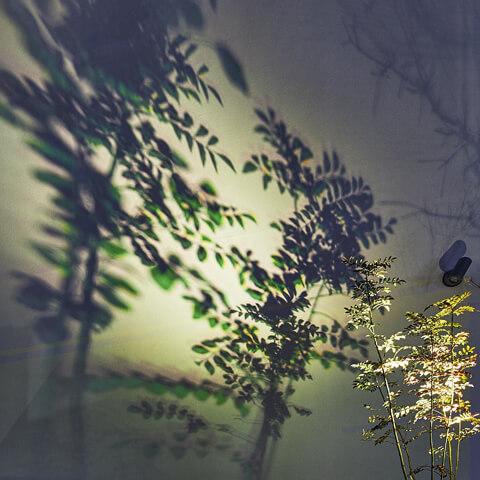 色づく影が美しいシャドーライティング