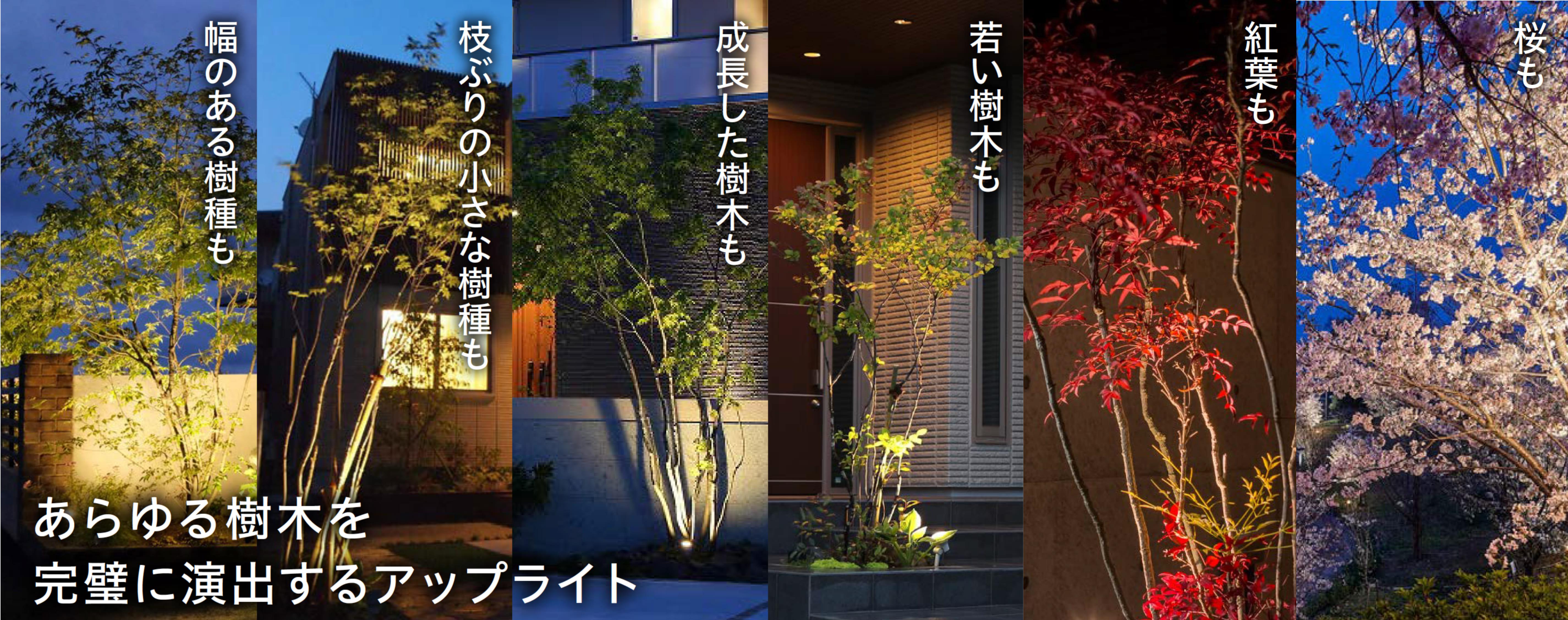 あらゆる樹木を完璧に演出するライトアップ
